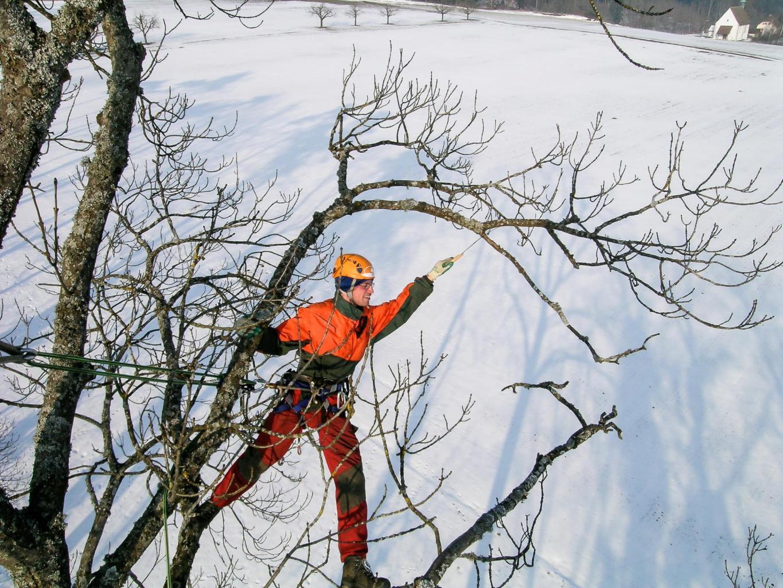 Baume Schneiden Und Pflegen Kumin Baumpflege Gmbh